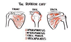 Rcuff